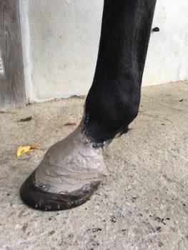 argile sur pied de cheval