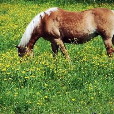 cheval dans un pré au printemps
