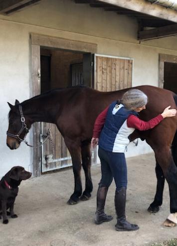massage d'un cheval