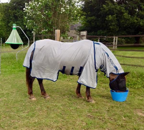 poney atteint de dermite recouvert avec une couverture spéciale
