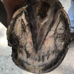 pied après traitement