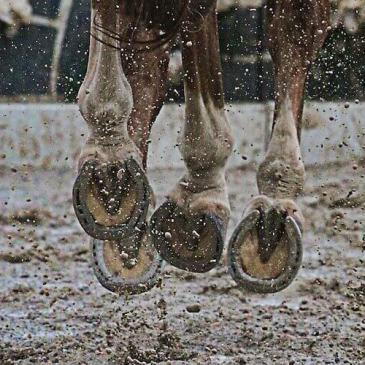 soin naturel fourchettes cheval