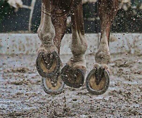 4 pieds de cheval