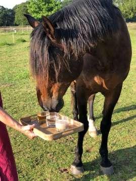 bar à eau pour poney