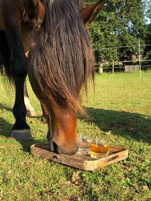 cheval boit dans un verre
