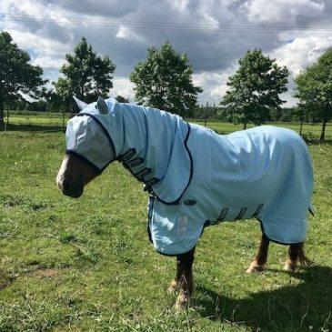 poney avec une couverture anti-mouches