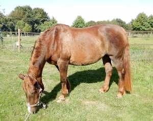 soins d'un poney dermiteux