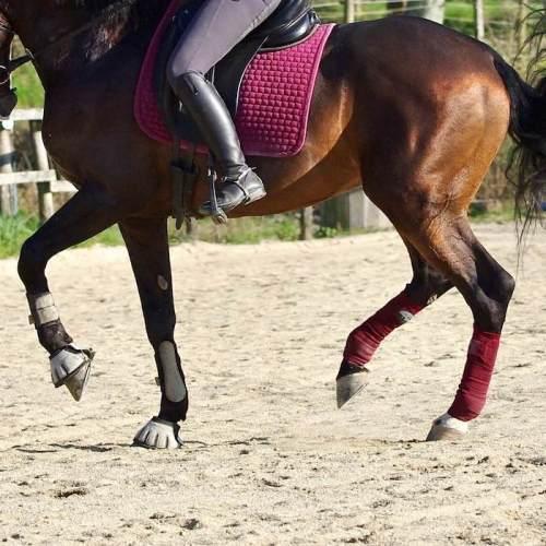 cheval au piaffé