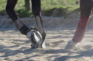 pieds d'un cheval de dressage