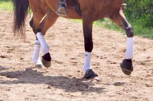 pieds de cheval